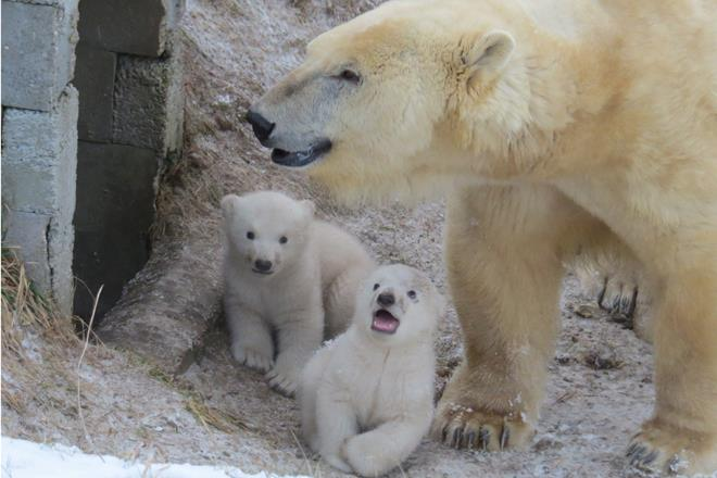 Polar Bear Family1