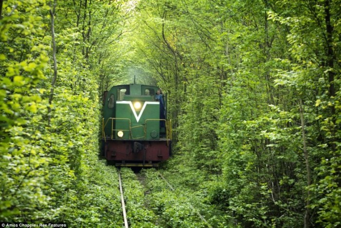 Train In the Forrest1