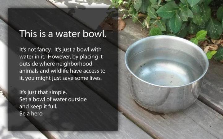 Water Bowl1
