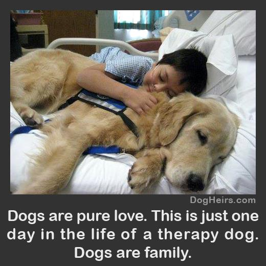 Dogs Are Pure Love1