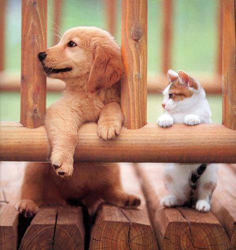 Furry Friends1