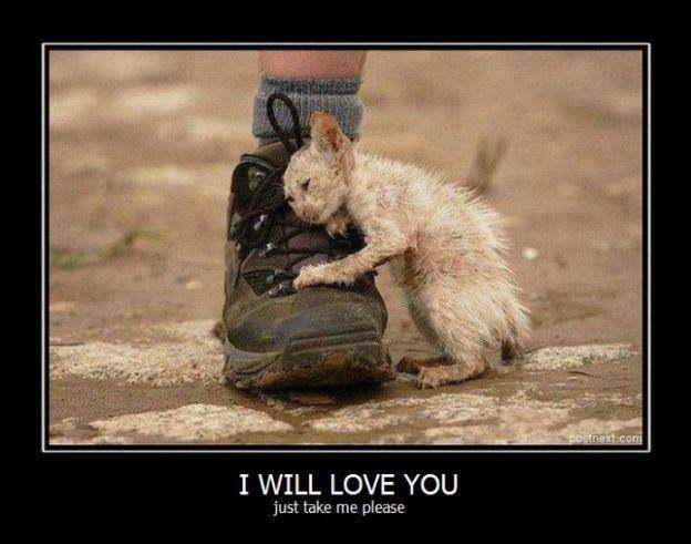 I WIll Love You1