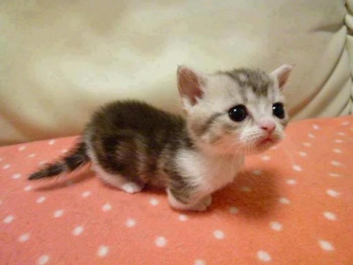 Mew Mew Kitten3