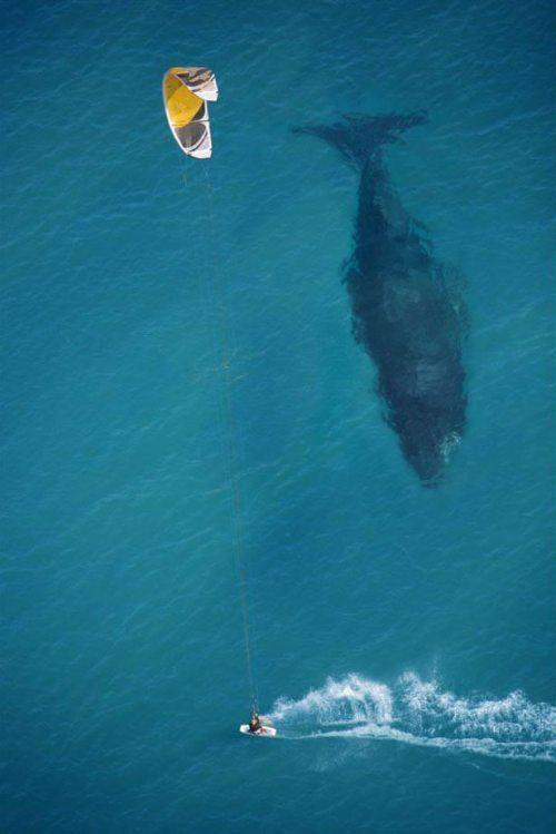surfing with a whale