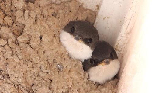 Cute Little Birdies