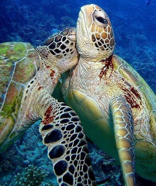 Turtles Together1