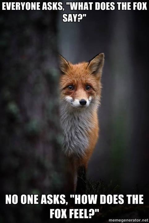How Does The Fox Feel