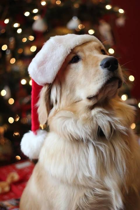 Christmas Woofies1