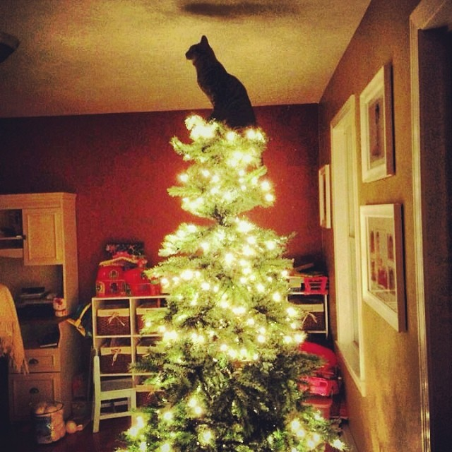 Kitty Tree Topper1