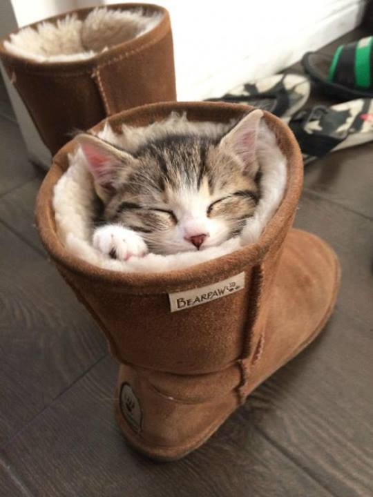 Cozy Kitty1