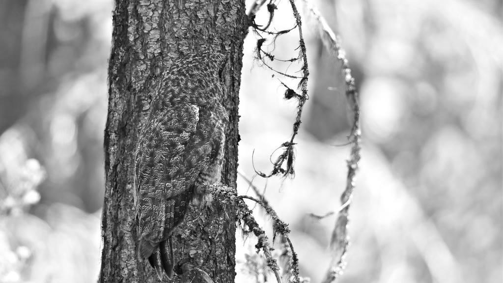 Spot The Owl