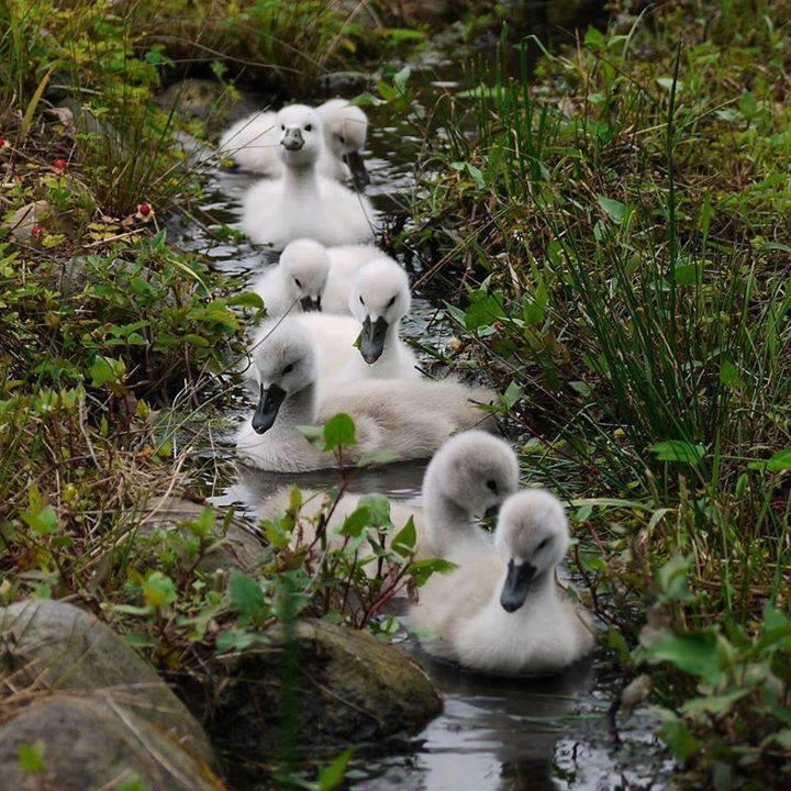 Little Duckies3