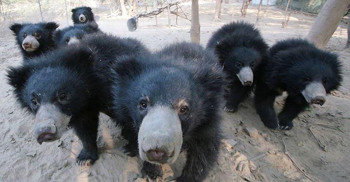 Friendly Bear Cubs